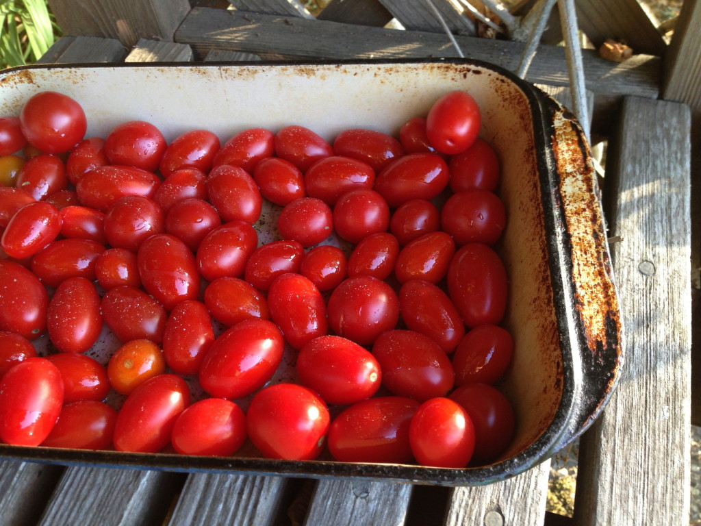 Layer of Small Ripe Tomatoes